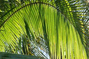 PalmArchNa1.jpg