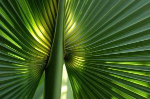 PalmPatternNa1.jpg