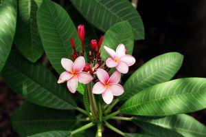 TropicalPlant1.jpg