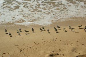 ShorebirdsA.jpg