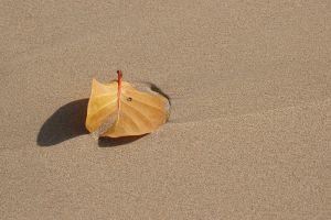 BeachLeafws.jpg