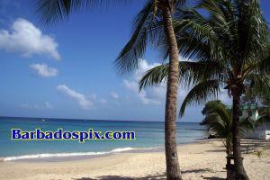 BeachPalmPixPC.jpg