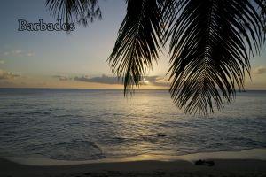 SunsetPalm.jpg